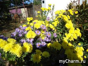 Мой осенний сад