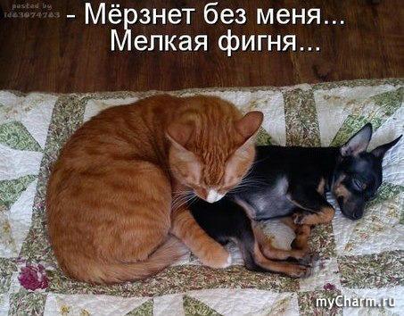 Кошачья жизнь в картинках
