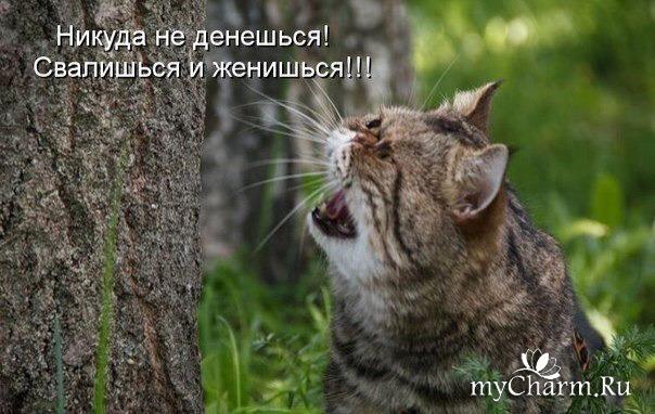 коты-проказники