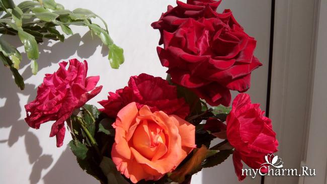 розы и кот
