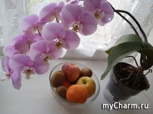 Вопрос к любителям орхидей