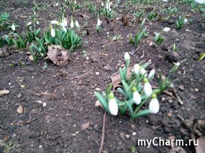 Лето не обещаю, но весну, пожалуйста