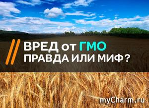 Что такое ГМО и есть ли от него вред?