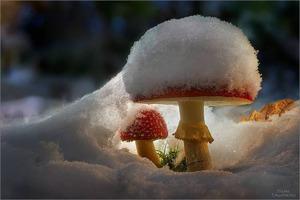 Январские грибочки