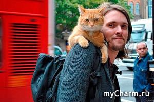 Он был совсем небольшим, милым, чудесным котом, но стал для меня настоящим героем!