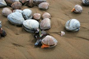 Ураган в Приморье засыпал местных жителей морскими деликатесами