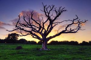 """Фото флешмоб. 28 этап. Новая тема: """"Дерево в кадре"""". Прием фото до 12 мая включительно"""