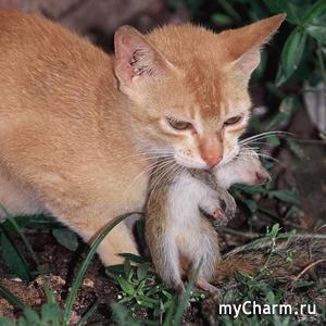 Про кота Ваську...
