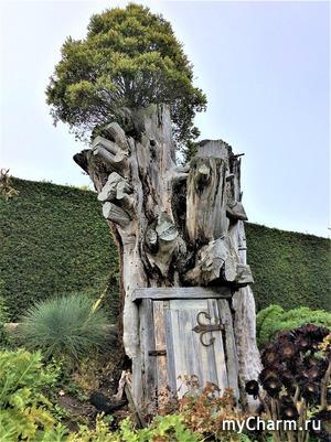 Мои любимые деревья в Новой Зеландии и вокруг света. Серия 2