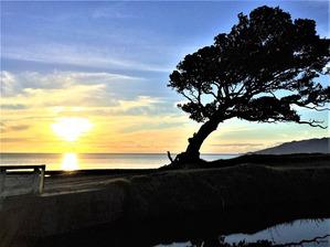Мои любимые деревья в Новой Зеландии и вокруг света. Серия 3.