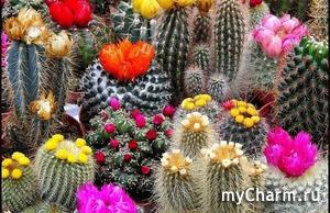 Вопрос любителям кактусов и вообще растений в горшках.