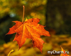 Фотофлешмоб. 38 этап. Тема «Осенняя симфония». Прием фото до 20 сентября включительно