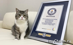 Коту из Японии посчастливилось попасть в Книгу рекордов Гиннесса